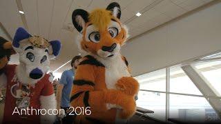 Kiba's Anthrocon 2016 Con Video (AC2016)