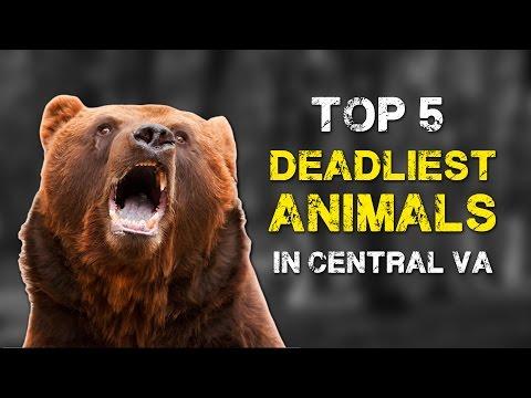 Top Five Live - Deadliest Animals in Central VA