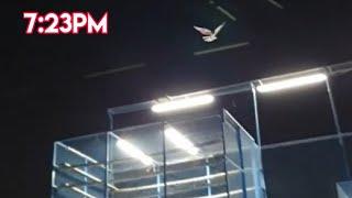 Dubai Pigeons Landing In Tournament 1st 5:450m 6:15pm 6:42pm 6:43pm 6:49pm 6:50pm 7:22pm 8th 7:23pm