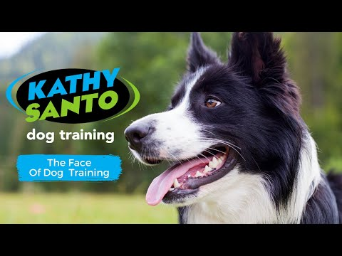 Kathy Santo Dog Training
