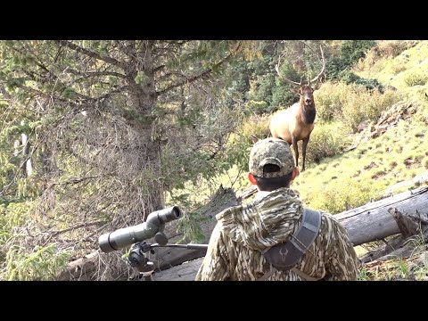 Special Bull Elk Hunt On The White Mountain Apache Tribe