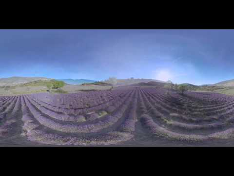 Fly over the fields of lavender - Givaudan 360° video
