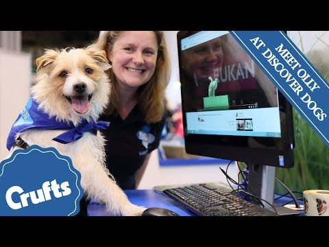 Meet Olly the Hilarious Jack Russell at Discover Dogs 2017!