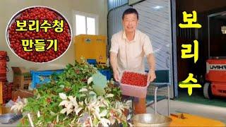 보리수열매 수확하여 보리수청 만들기 (보리수청 만드는 …