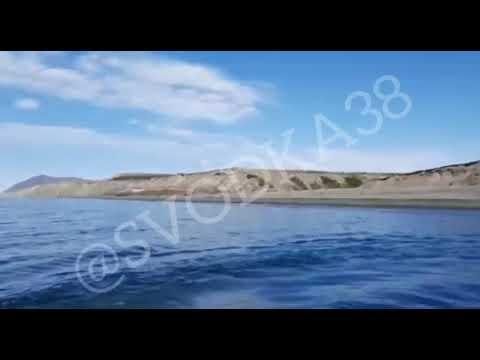 Видео с медведем