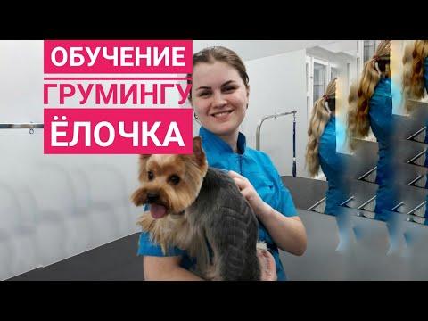 Обучение грумингу в Одессе. Рисунок на йорке \