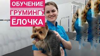 Обучение грумингу в Одессе. Рисунок на йорке