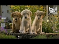 Marley And Me The Puppy Years | the Sprinkler Clip [hd] | 20th Century Fox video