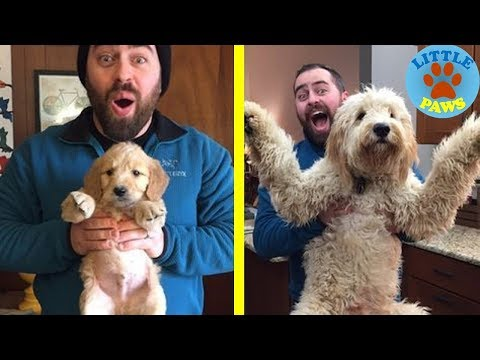 Extremely Cute Before & After Photos Of Dogs And Their Owners Growing Up Together