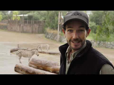 Ben introduces our gorgeous zebra foal!