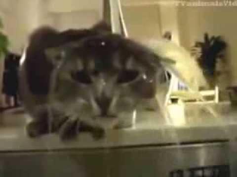 Cat Shower Bathing Washing His Hair