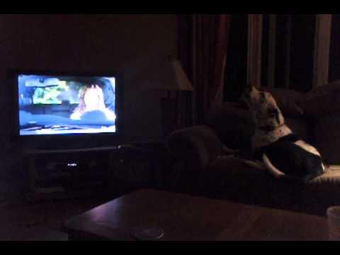 Geico Dog Show Commercial
