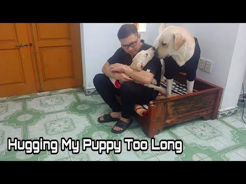Hugging my dog for too long - KimChi Labrador   Phn ng C Ci khi N� �m Kim Chi tht l�u