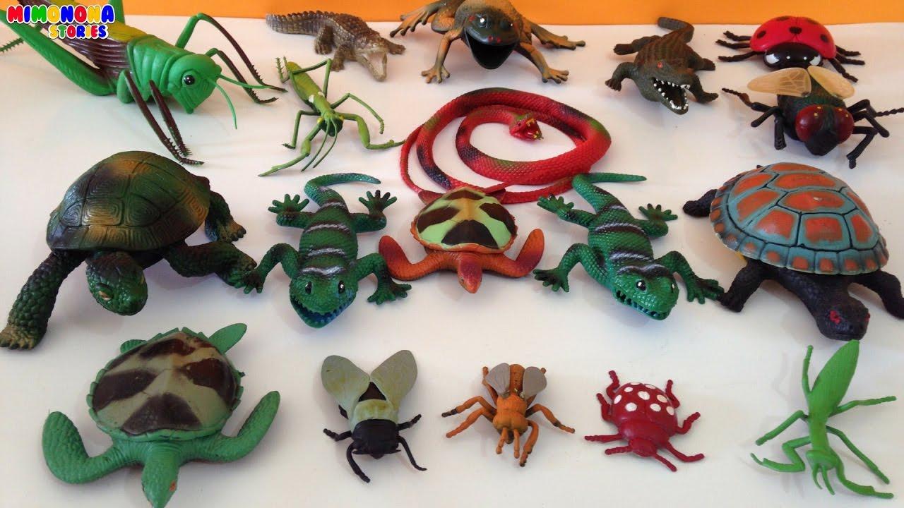 Coleccion de Reptiles e Insectos para niños Videos de