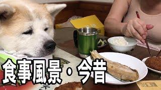 grandchild and German Shepherd dog JAPANESEAKITA 大型犬と暮らす孫達...
