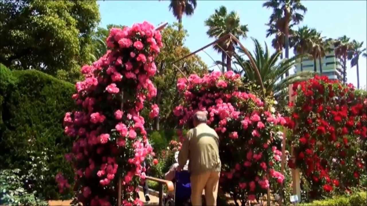 Shikishima Park O mais lindo jardim de rosas do mundo  YouTube