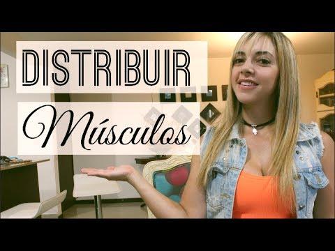 MI DISTRIBUCION DE MUSCULOS PERIODIZACION! | Naty Arcila |