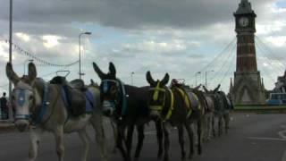 Skegness Donkeys