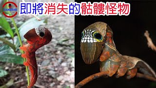 [TOP3]數個即將滅絕的'怪物' | 世界上僅存2隻的生物 | 沒有翅膀的鳥真的存在
