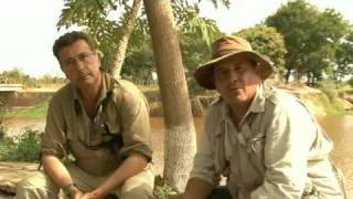 Venezuela paraiso de aves avi