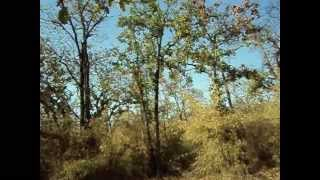Bandhavgarh National Park  Madhya Pradesh India -- Dr Manisha Saxena.wmv