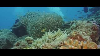 Amami Island Underwater footage Epic Dragon