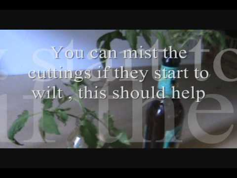 how to clone a tomato plant  cloning tomato plants, Natural flower