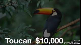 World most expensive 10 animals with  coast