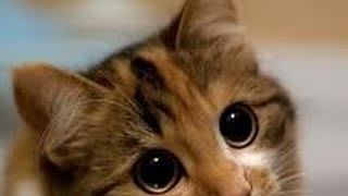 Cats and dogs with big cute eyes - Funny and cute animal compilation