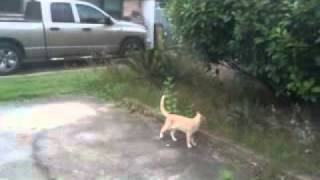 Bird Bullies Cat EPIC FAIL!!! w/YouTube Editor