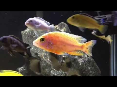 How To Treat Injured Fish | Salt, Melafix, & Water | MEDICATION