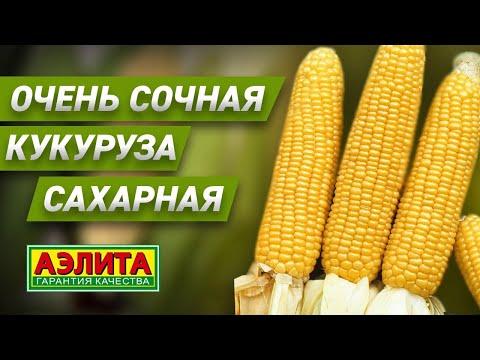 Вопрос: Какие сорта кукурузы лучше всего подходят для консервирования?