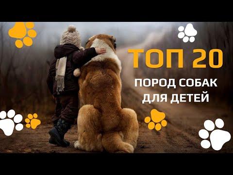 Топ-20 пород собак для детей