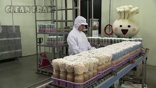 Công nghệ trồng nấm kim vàng châu Á - Trang trại trồng và thu hoạch nấm đẹp
