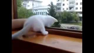 Заботливый котенок!!!