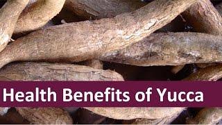 Health Benefits of Yucca