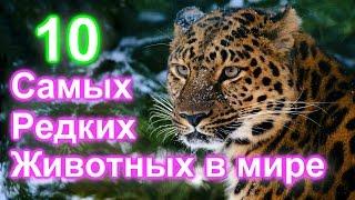 10 Самых Редких Животных в Мире (Топ 10) | Всякое Интересное