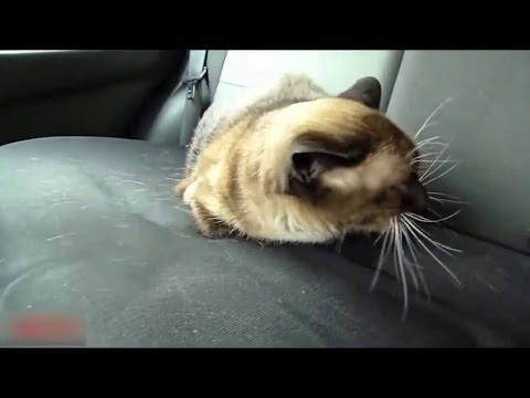 Pet Reactions When Going to the Vet Compilation 2016