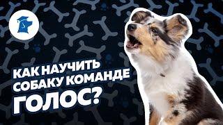 Kак научить собаку команде голос?