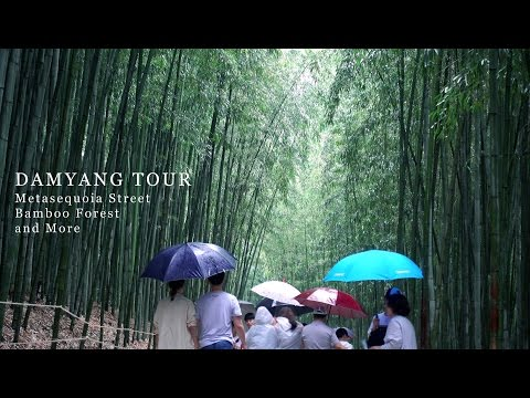Damyang 4K, Metasequoia Road, Bamboo Forest | RX100 Mount for Zhiyun Smooth-C | EVDCV
