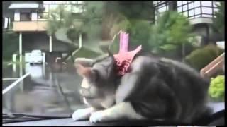 Самое смешное видео про животных коты и кошки(Развлекайтесь вместе с нами! Самые смешные видео со всего интернета.Подписывайтесь на наш канал! Экологичн..., 2015-09-14T20:36:05.000Z)