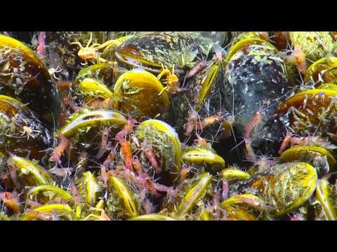 Life at Extremes: Biology of Brine Pools and Methane Seeps | Nautilus Live