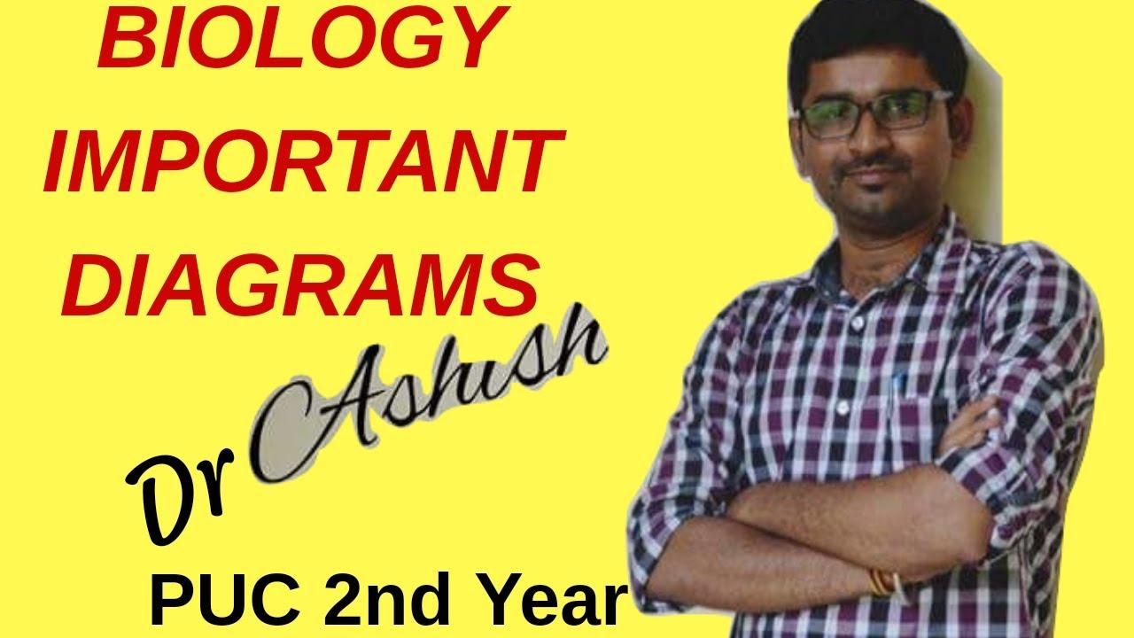 Biology Puc 2nd Year Important Diagram Karanataka Pu Board