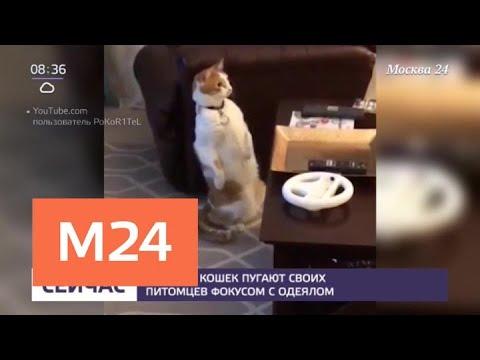 Вопрос: Почему хозяева перекармливают котов?