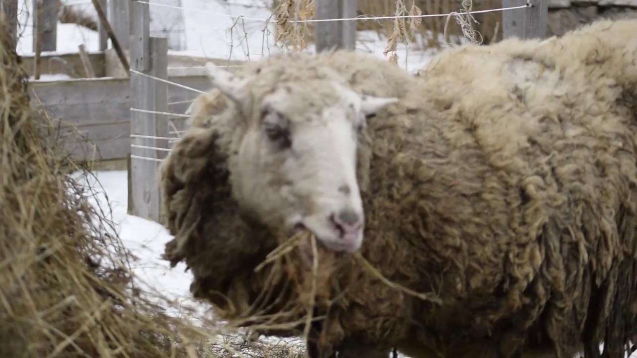 Как сделать кормушку для сена овцам фото 822
