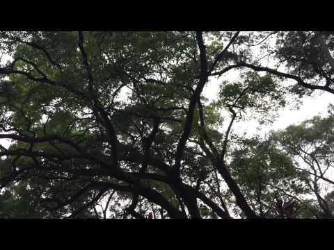 Hiking from Mui Wo to  Discovery Bay