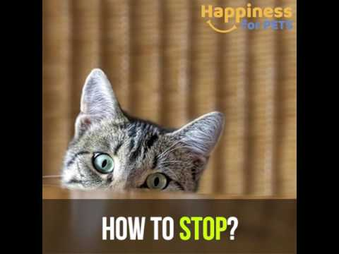 why do cats knock things over? Find out here!