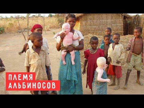 Куна - Племя альбиносов, где правят женщины, а женихи убегают от невесты