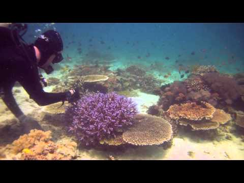 Collecting Coral: 2011 Philippine Biodiversity Expedition | California Academy of Sciences