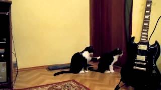кошка просит извинения